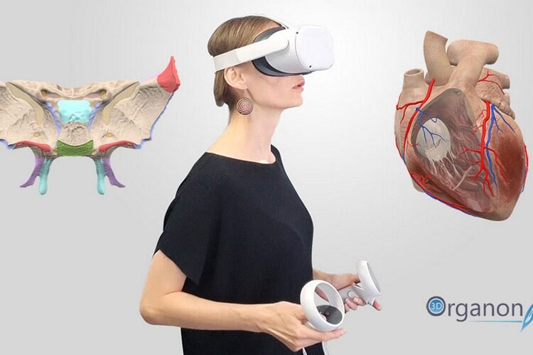 Medis Media: New funding for the healthtech platform 3D Organon